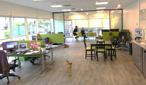 Open Office Spaces Love Them Or Hate Them Lux Insights